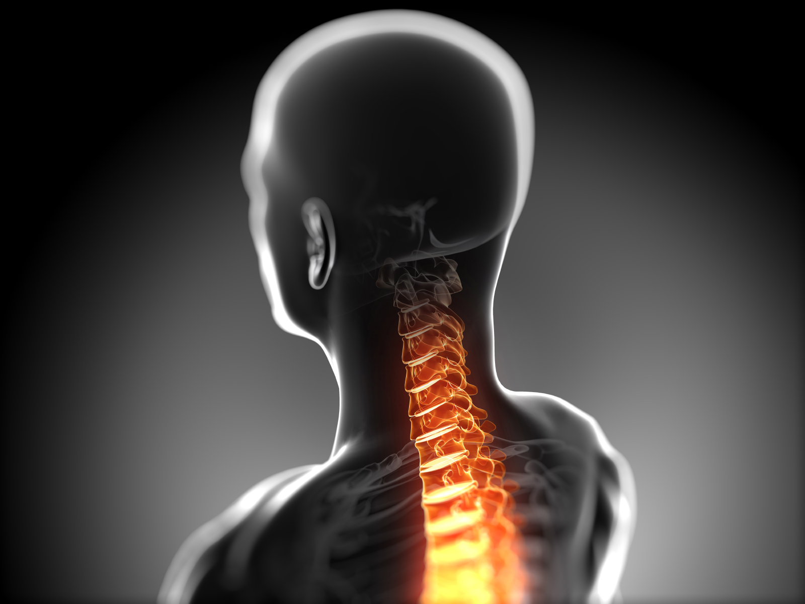 3d rendered anatomy illustration - painful back